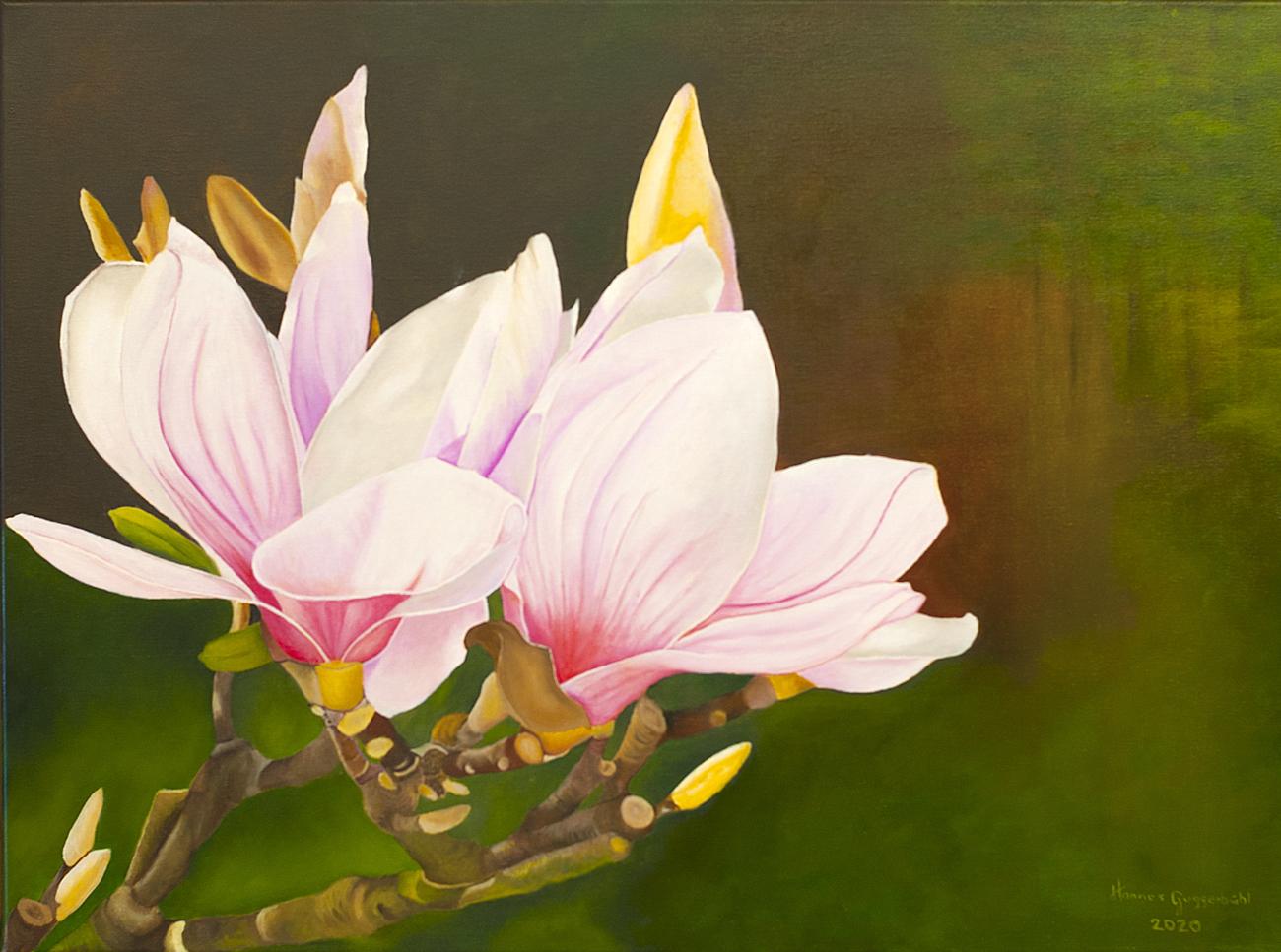 Magnolie Tulpenmagnolie