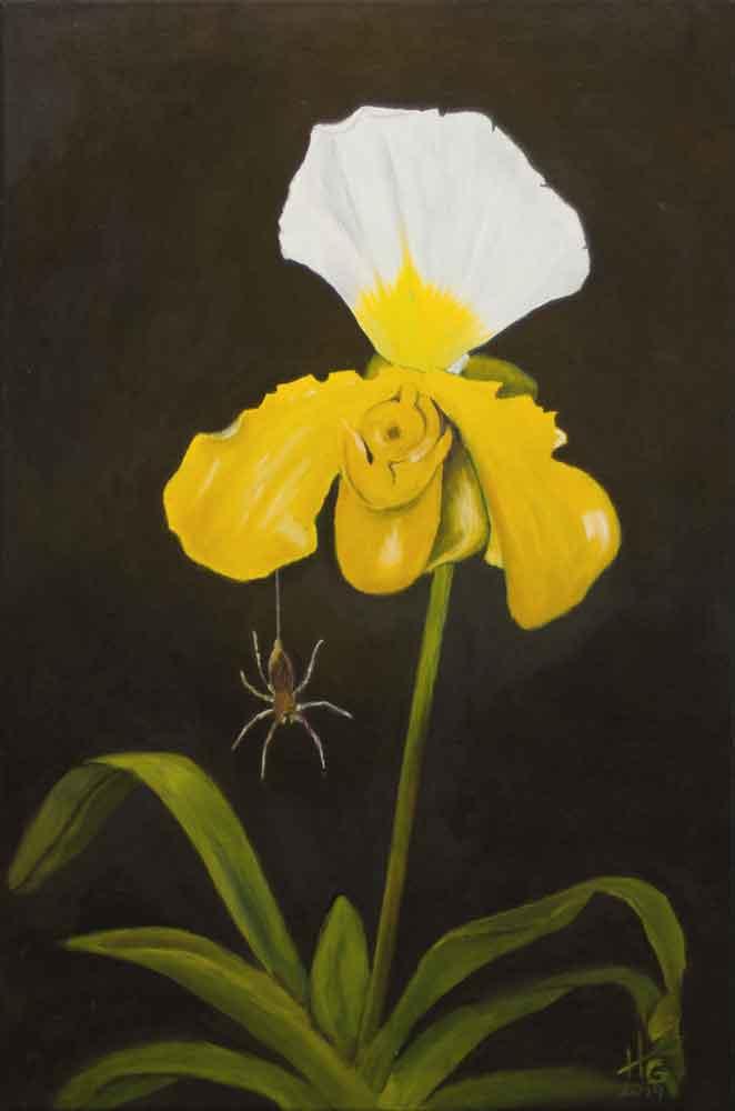 Orchidee (Paphiopodilum)
